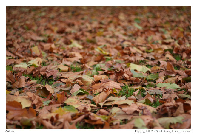 Leaves scattered everywhere
